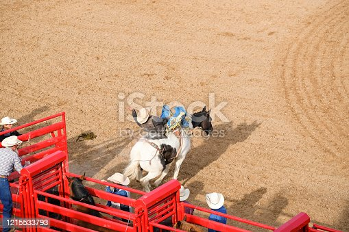 Bronco chute at the rodeo.Bucking Bronco at the rodeo.