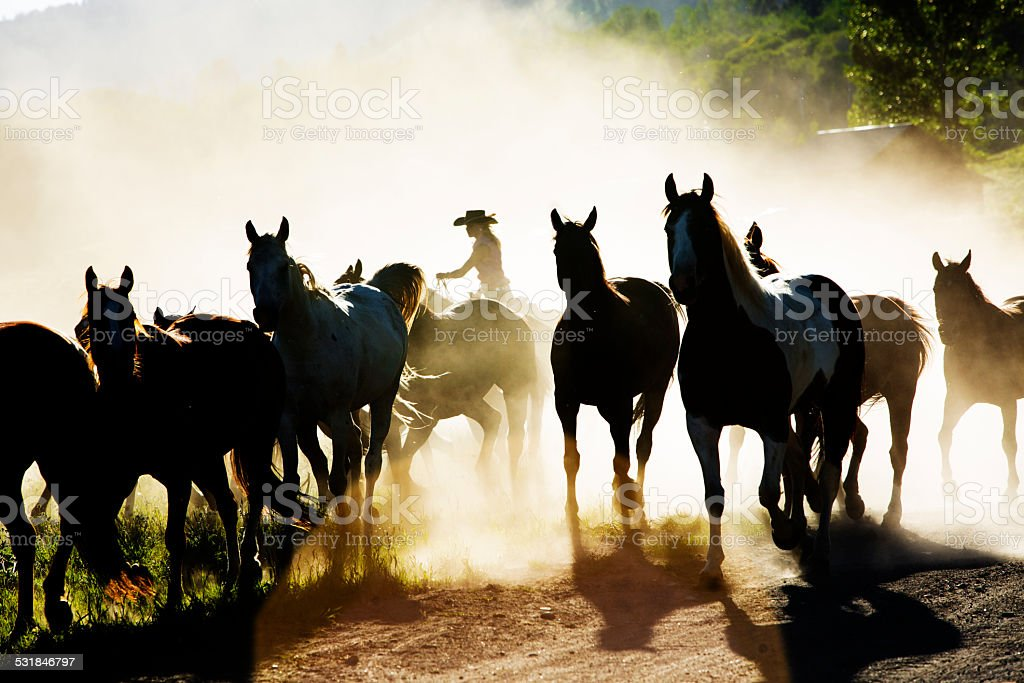 Cowboys: Woman wrangler herds horses. Horseback riding. Ranch life. stock photo