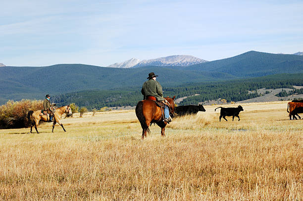 Cowboys,Horses and Mountains stock photo