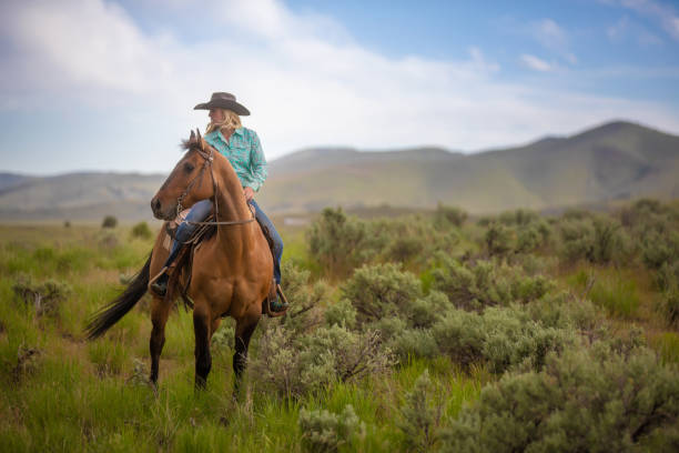 Cowgirl Horseback Riding Cowgirl Horseback Riding rancher stock pictures, royalty-free photos & images