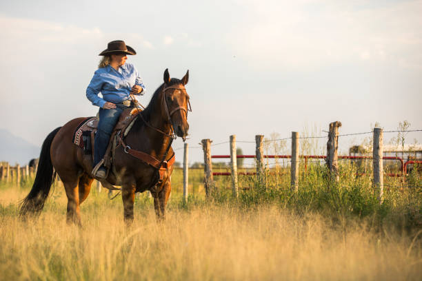 Cowgirl A cowgirl looks over her land in the Western USA rancher stock pictures, royalty-free photos & images