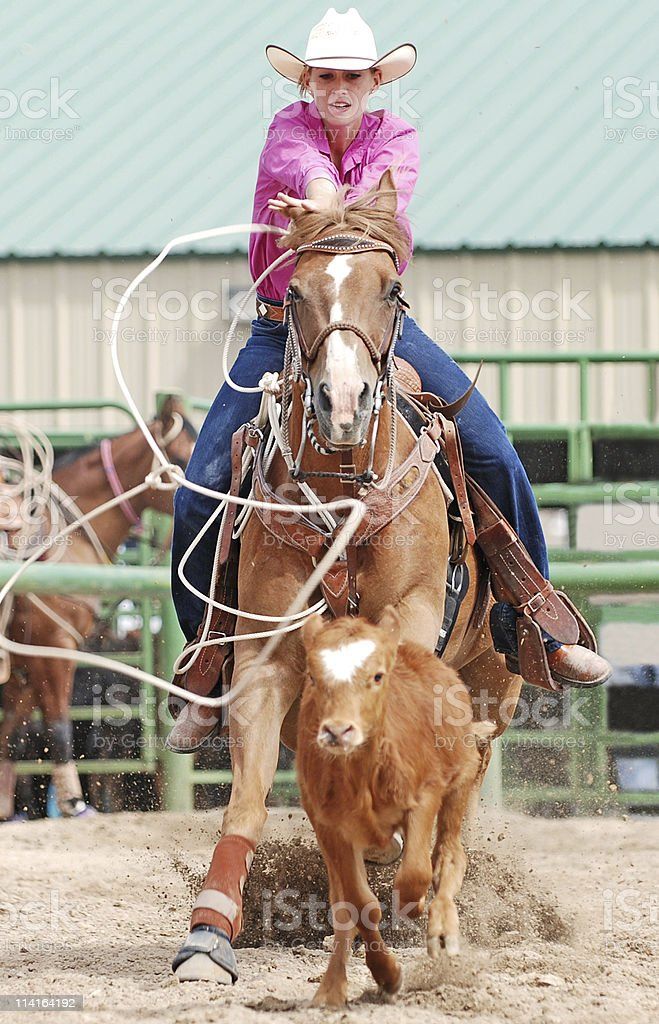 Cowgirl Roping A Calf stock photo