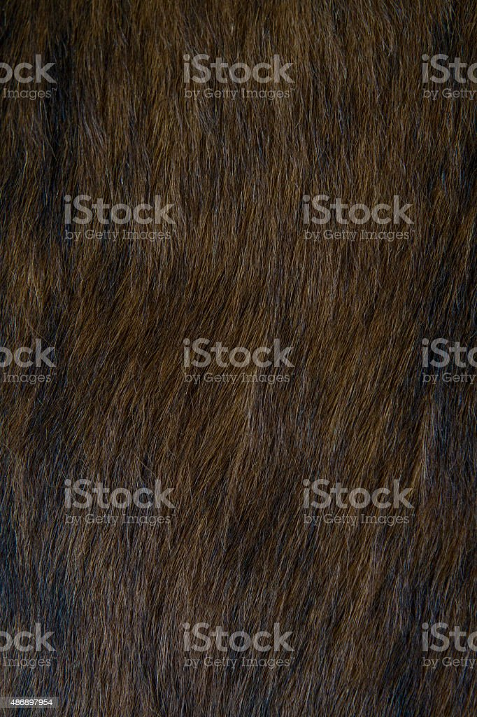 cowhide up close stock photo