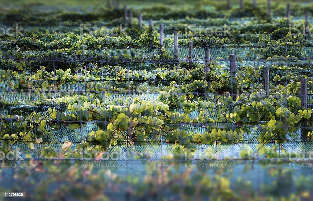 Cowichan Valley Wine stock photo