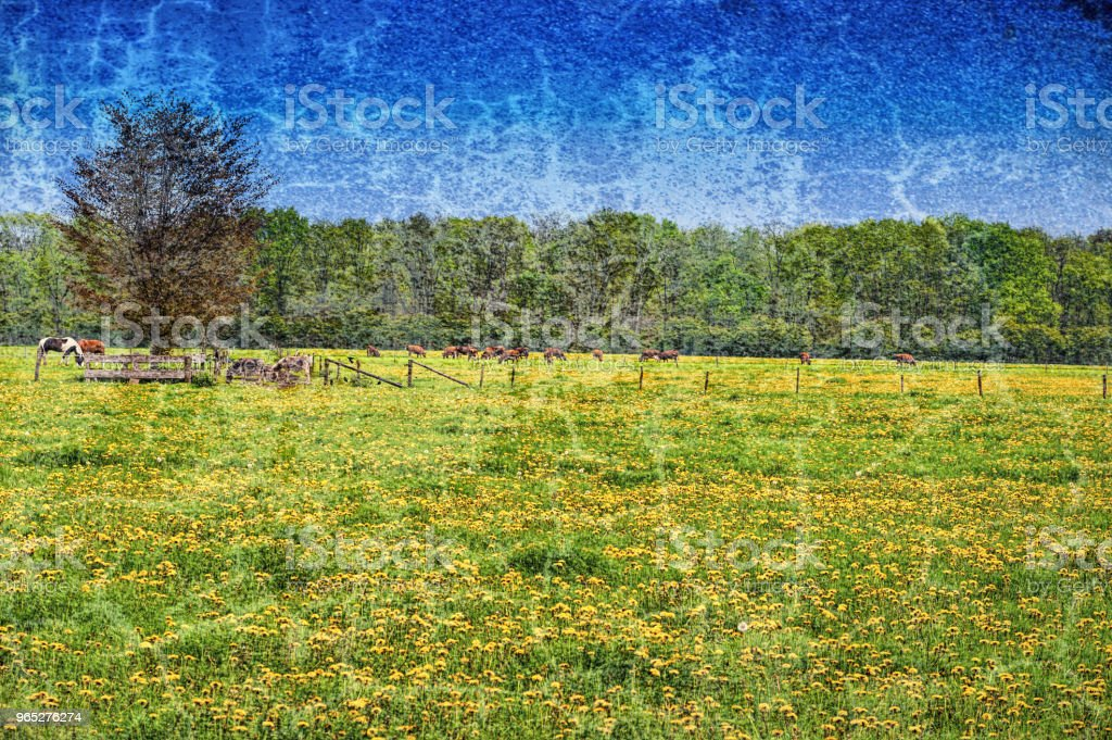 Cows and Bulls Grazing on Meadows royalty-free stock photo