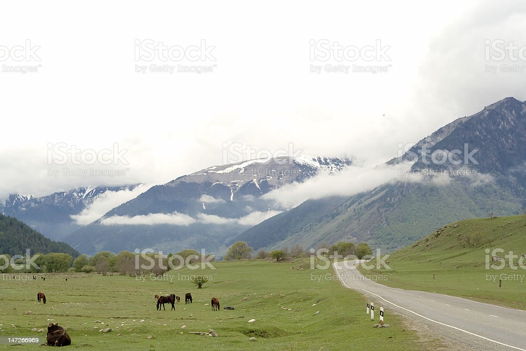 cows and horses on green field royalty-free stock photo