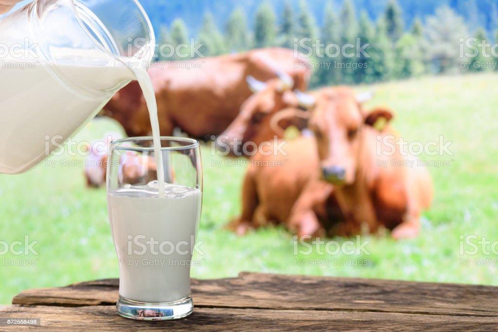 Cows and pouring milk - Foto stock royalty-free di Affari finanza e industria