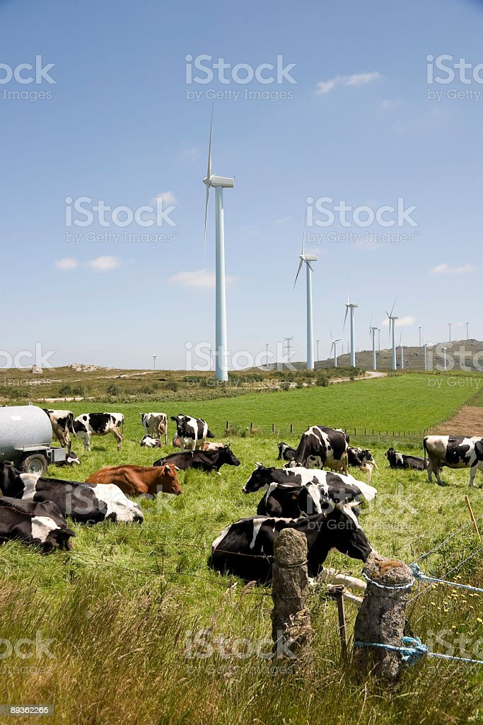 cows and turbines. royalty-free stock photo