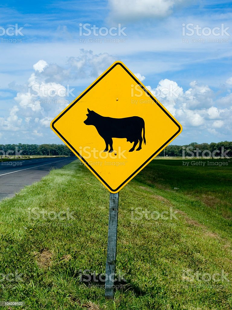 Cows Crossing royalty-free stock photo
