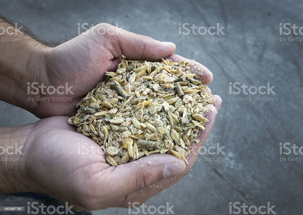 Cow's feed stock photo