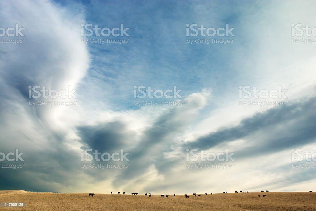 Cows feeding under a spectacular sky stock photo