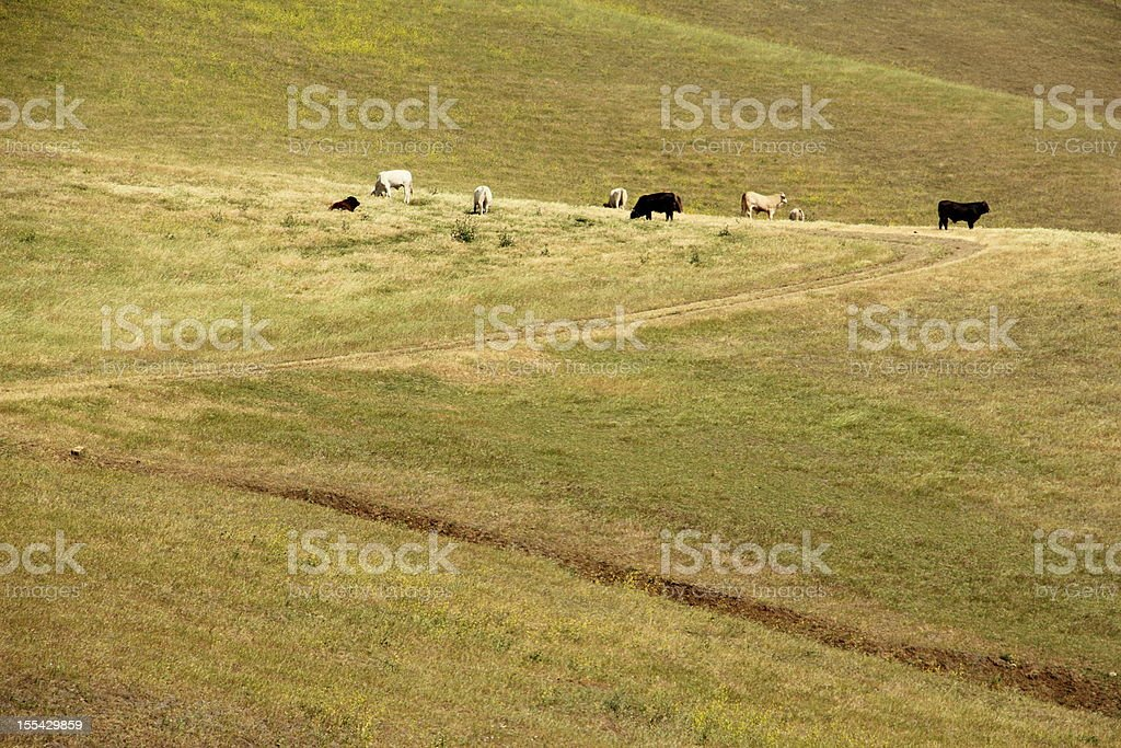 Cows Grazing Hillside royalty-free stock photo