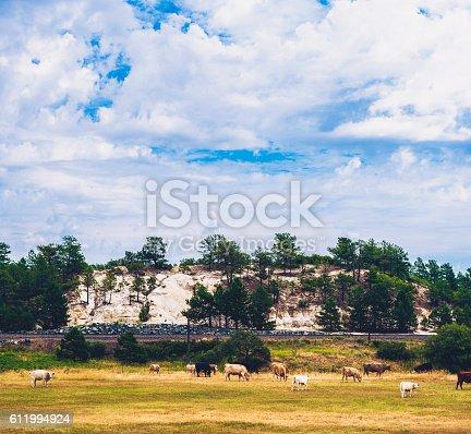 Cows grazing in field under beautiful skies