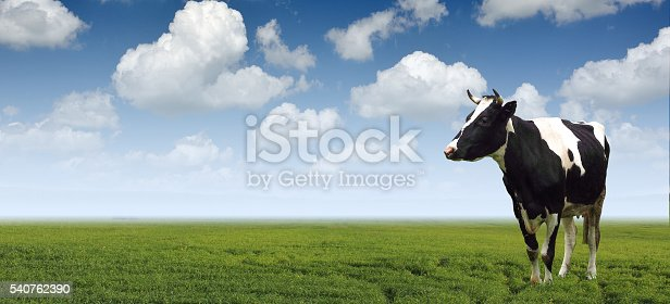 istock Cows grazing on a green meadow agriculture. 540762390