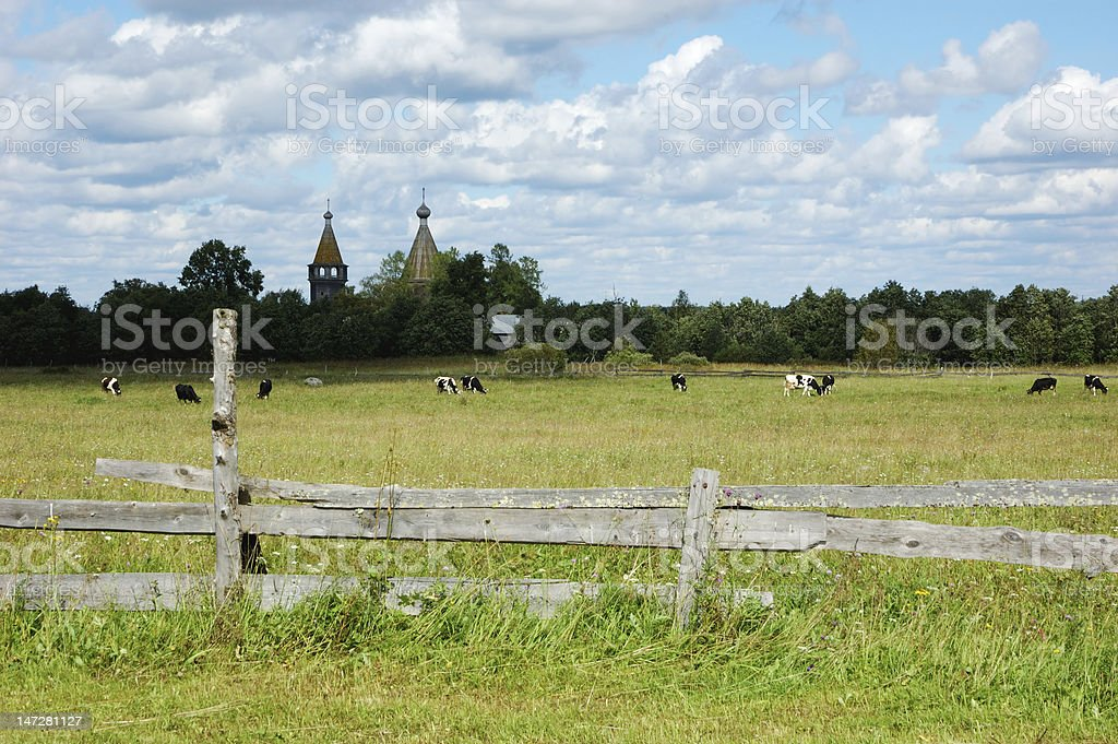 Cows grazing on a pasture with ancient wooden church royalty-free stock photo
