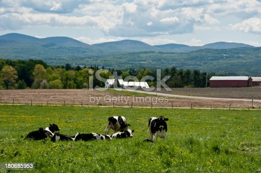 488912426istockphoto Cows in a spring field 180685953
