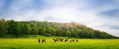 istock Cows on a field 148487154