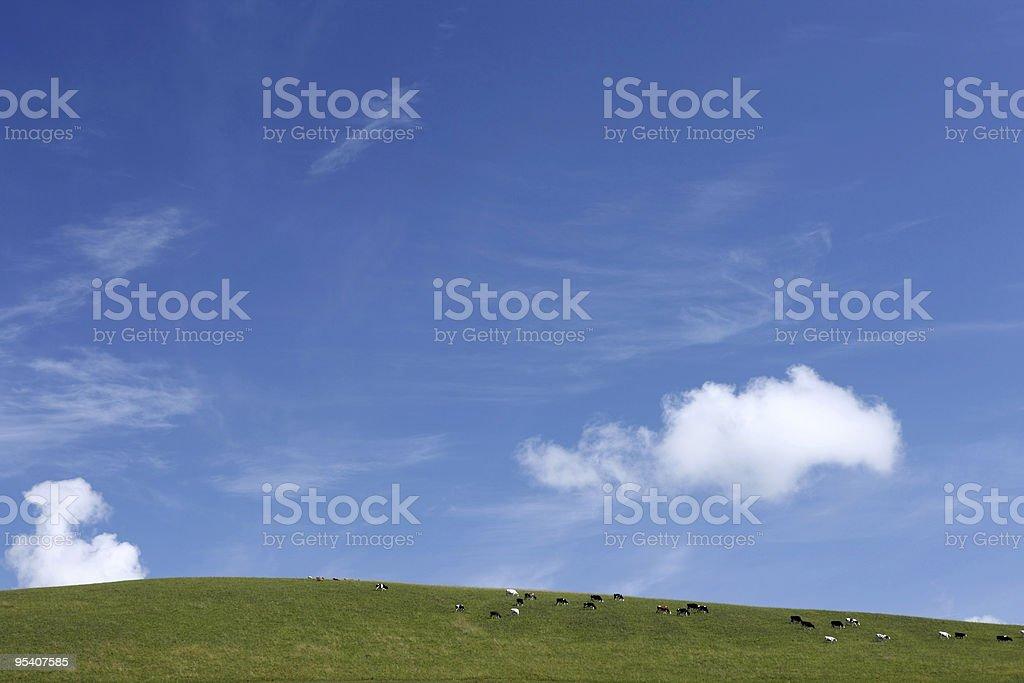 Kühe auf der grünen Wiese gegen einen blauen Himmel. Lizenzfreies stock-foto