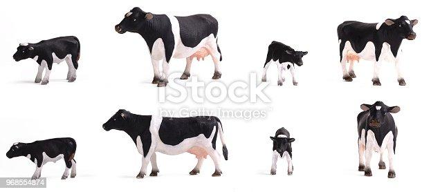 istock cows 968554874