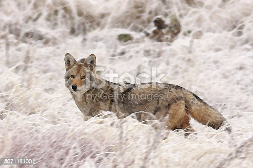 Coyote Canis latrans in blowing winter snow storm - watercolor painting, with property release.