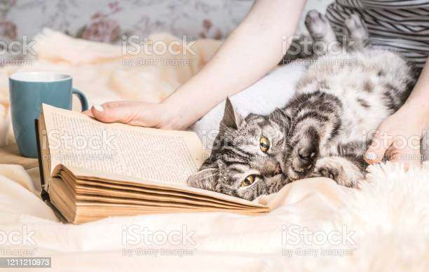 Cozy home atmosphere with british cat lying on the book weekend at picture id1211210973?b=1&k=6&m=1211210973&s=612x612&h=0bn2tavkds5 z2m4bal6mdkpjbtowpch91mnqalxjla=