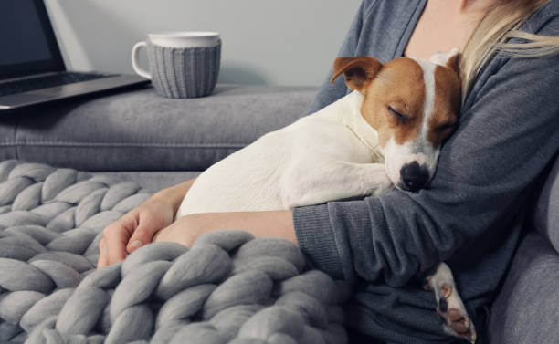 cozy home, woman covered with warm blanket watching movie, hugging sleeping dog. relax, carefree, comfort lifestyle. - embracing stock pictures, royalty-free photos & images