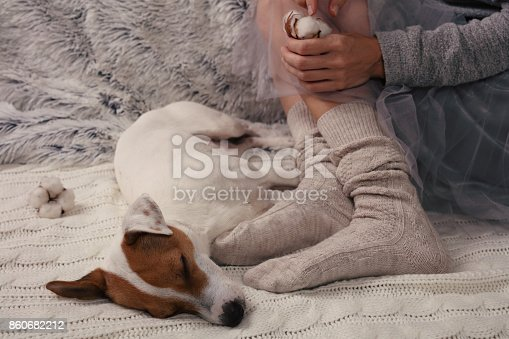 618750646 istock photo Cozy lazy day at home. Woman wearing soft warm wool socks relaxing at home, playing with dog, jack Russel terrie Relaxing, comfy lifestyle. 860682212