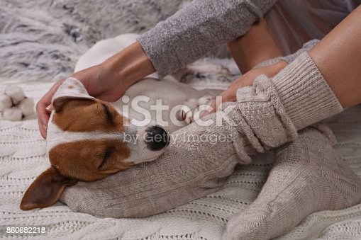 618750646 istock photo Cozy lazy day at home. Woman wearing soft warm wool socks relaxing at home, playing with dog, jack Russel terrie Relaxing, comfy lifestyle. 860682218