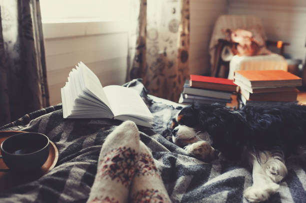cozy winter day at home with cup of hot tea, book and sleeping dog. Spending weekend in bed, seasonal holidays and hygge concept stock photo