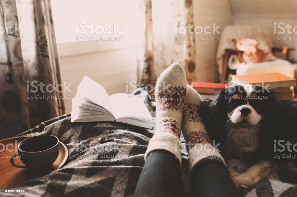 cozy winter day at home with cup of hot tea, book and sleeping dog. Spending weekend in bed, seasonal holidays and hygge concept cozy winter day at home with cup of hot tea, book and sleeping dog. Spending weekend in bed, seasonal holidays and hygge concept Adult Stock Photo