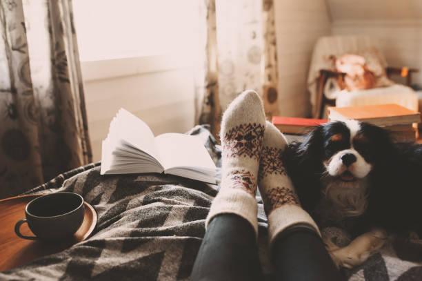 gemütliche wintertag zu hause mit tasse heißen tee, buch und schlafenden hund. wochenende im bett, weihnachtsferien und hygge konzept - behaglich stock-fotos und bilder