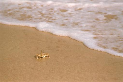 crab at a beach