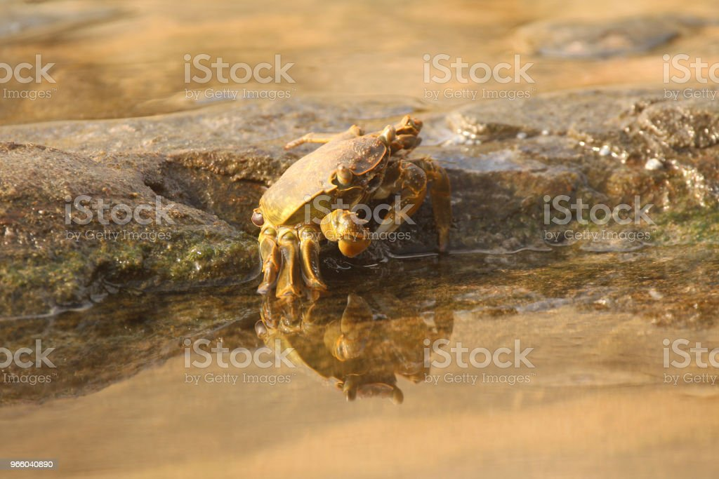 Crab camouflaged on the rocks - Royalty-free Animal selvagem Foto de stock