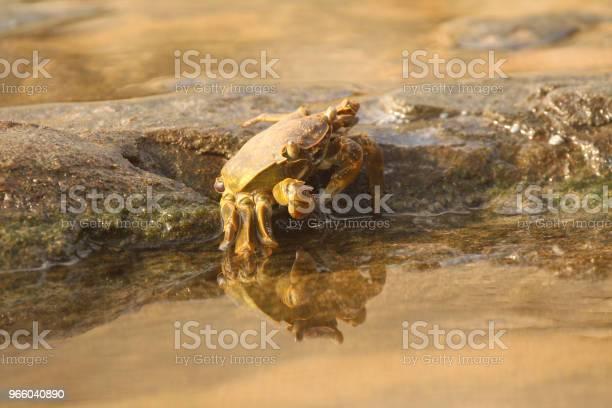 Crab Camouflaged On The Rocks - Fotografias de stock e mais imagens de Animal selvagem