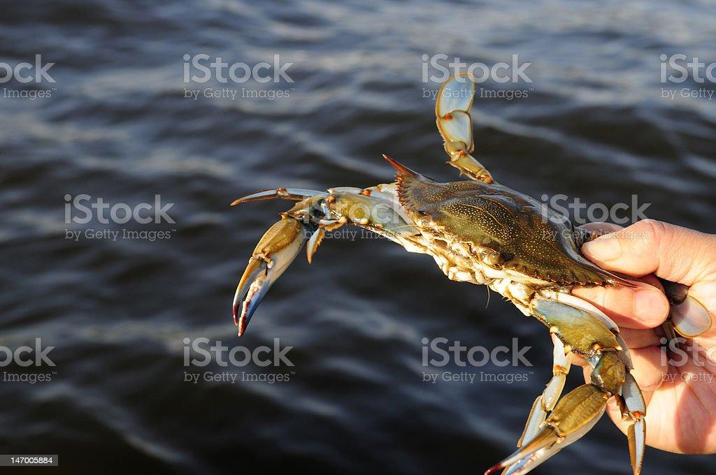 Crab caught in hand against ocean stock photo