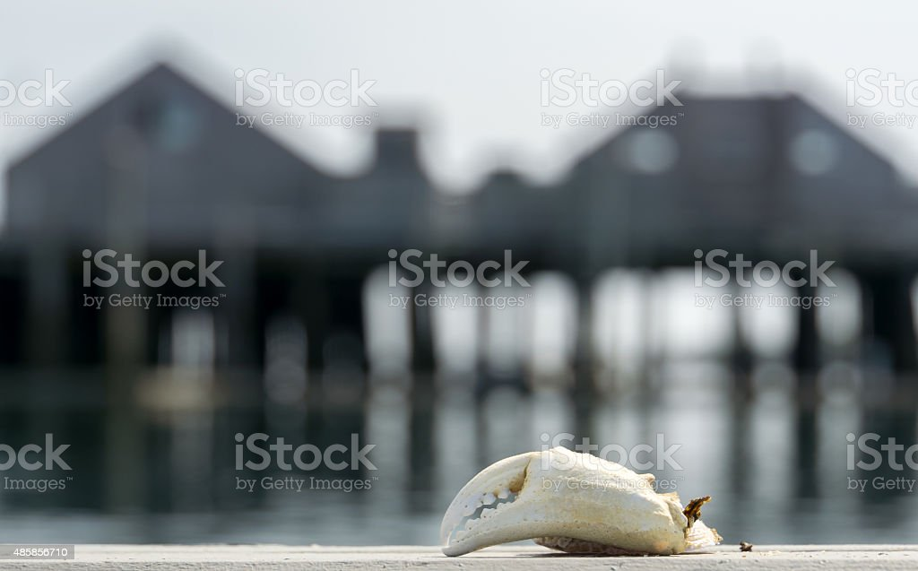 Crab Claw in Provincetown stock photo