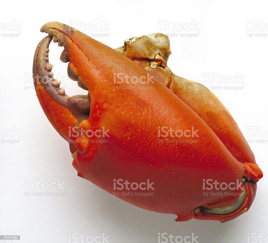 Pinces de crabe photo libre de droits