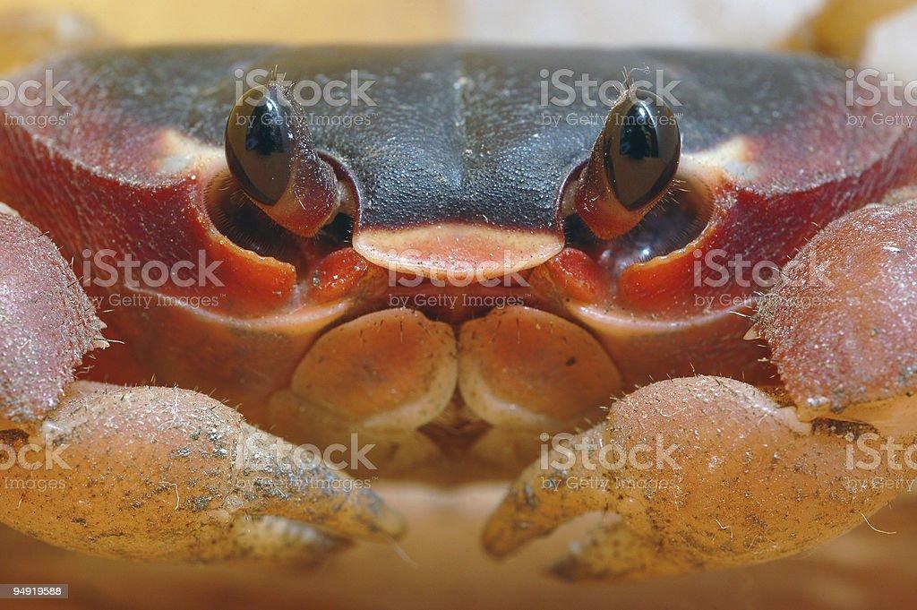 Crab close up royalty-free stock photo
