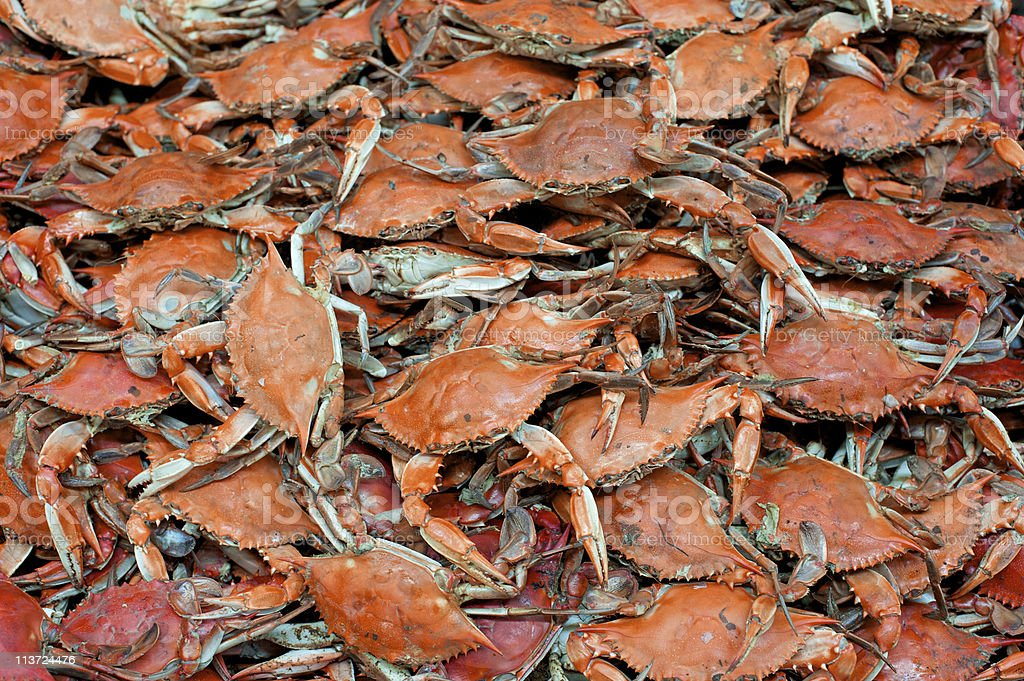 Crab Fest stock photo
