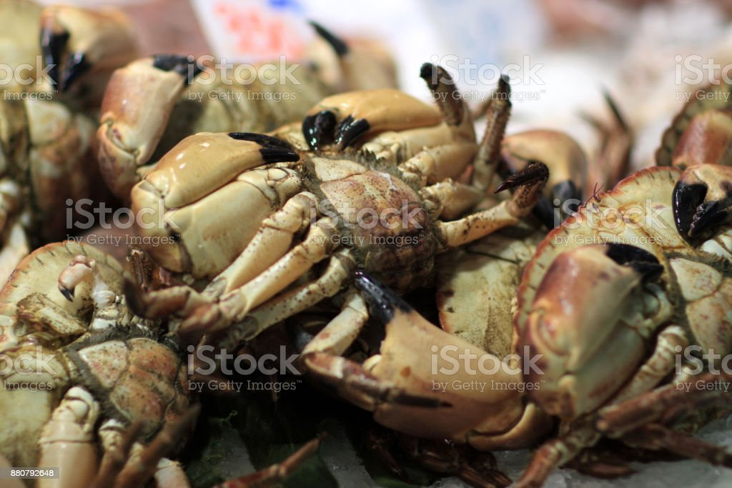 Crab For Sale At Market Stock Photo - Download Image Now - iStock