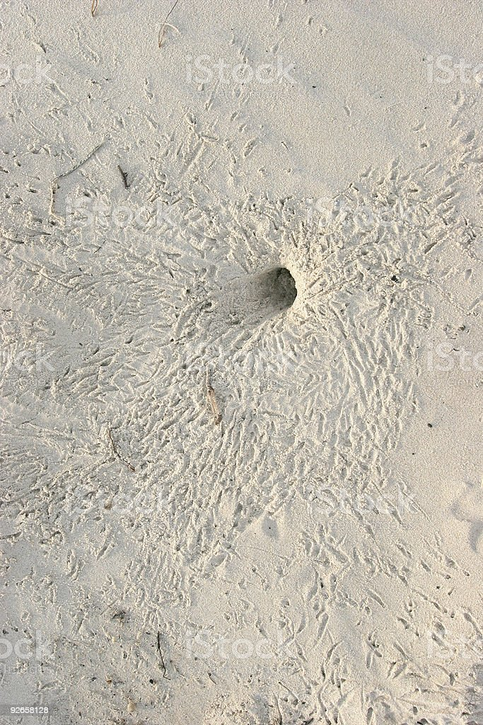 Crab Hole royalty-free stock photo