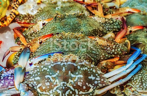 Crab. Ice Raw catch sale fish market background Close-up blue crabs.