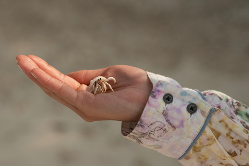 Womans hand with a crab.