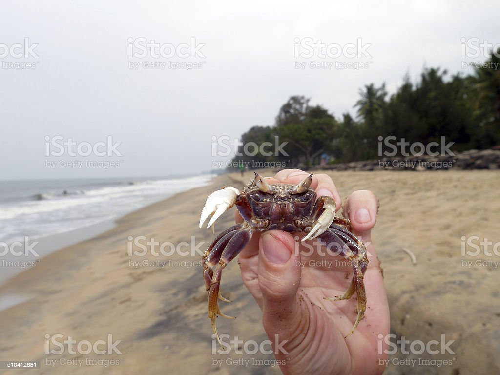 Crab in his hand stock photo