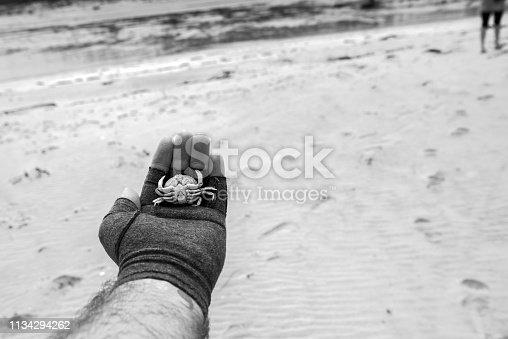 Petit crabe trouver mort sur une plage