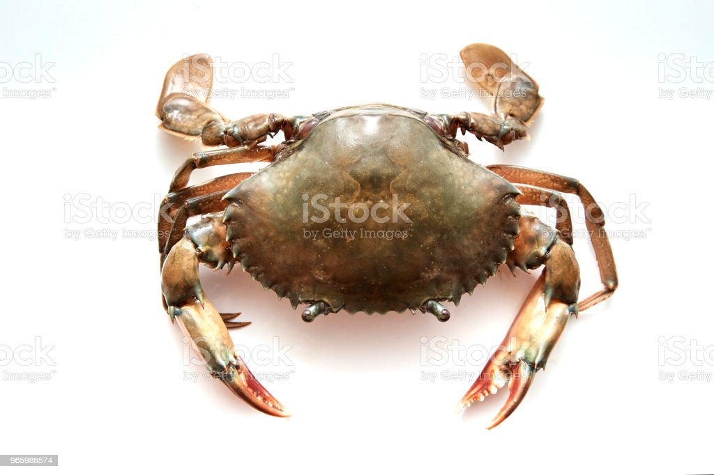 Crab isolated on white background - Royalty-free Above Stock Photo