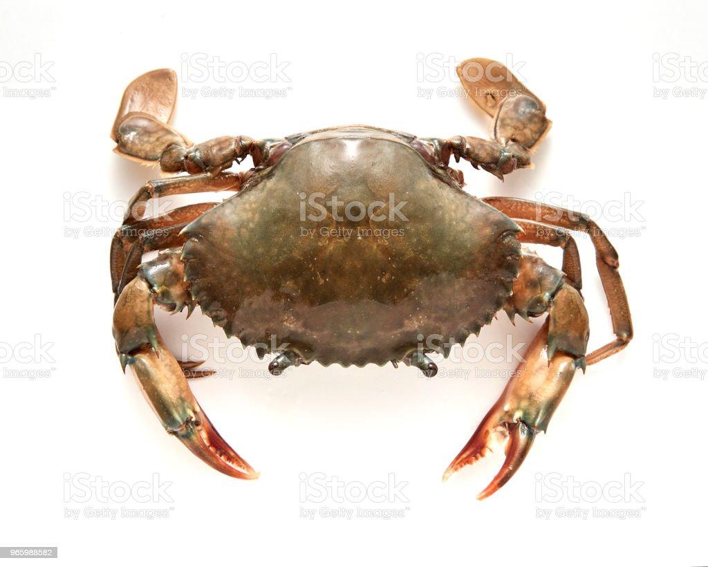 Krabba isolerad på vit bakgrund - Royaltyfri Bildbakgrund Bildbanksbilder