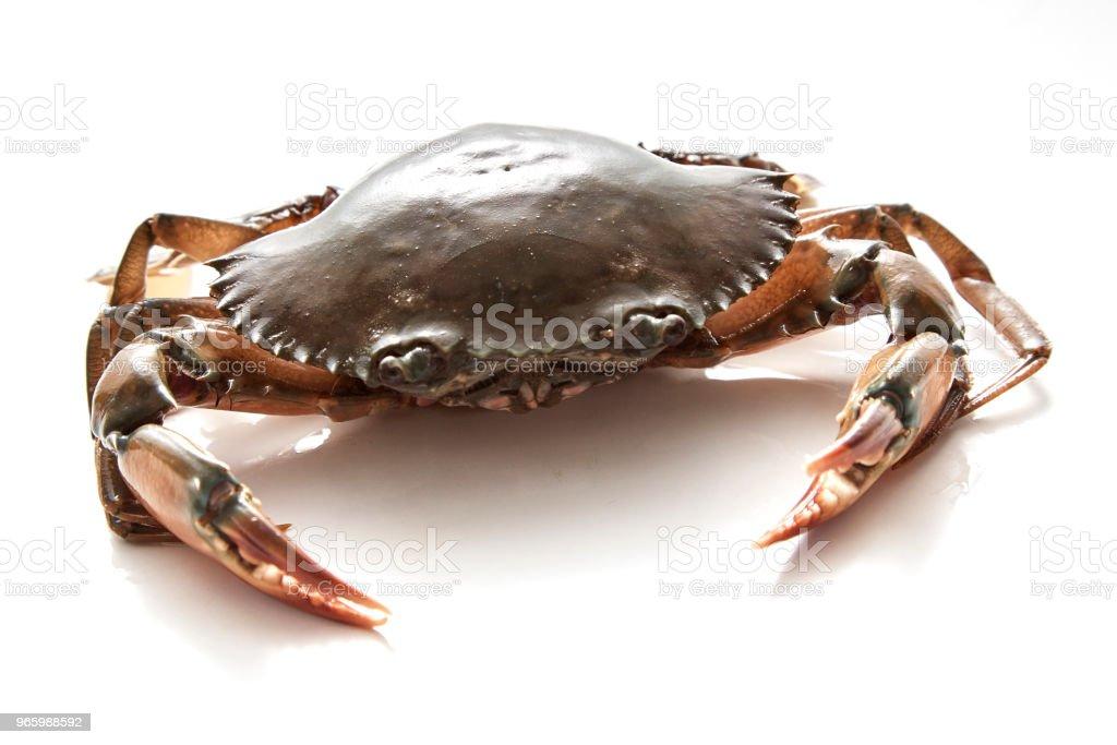 Crab, isoliert auf weißem Hintergrund - Lizenzfrei Bildhintergrund Stock-Foto