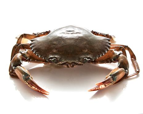 Krabba Isolerad På Vit Bakgrund-foton och fler bilder på Bildbakgrund