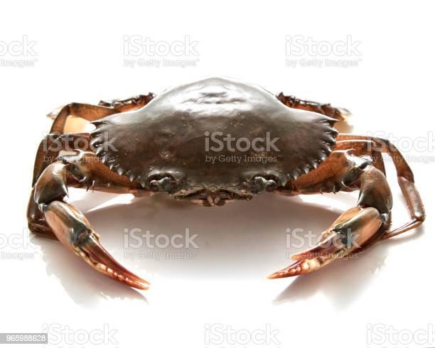 Crab Isoliert Auf Weißem Hintergrund Stockfoto und mehr Bilder von Bildhintergrund